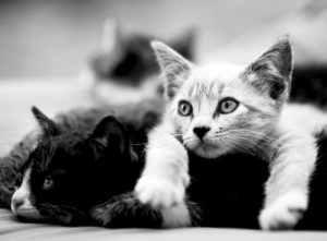 Pet Health - Cats Playing