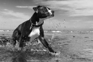 Pet Health - Dog Playing in Water