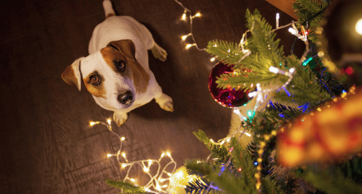 Holiday-Safety-Tips-for-Pets