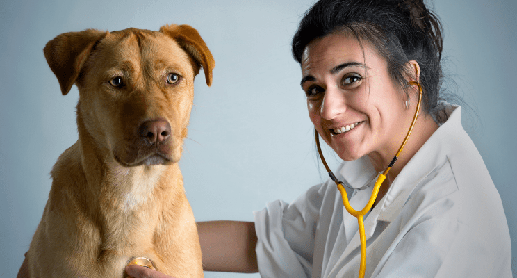 Pros-and-Cons-of-a-Corporate-Veterinary-Clinic