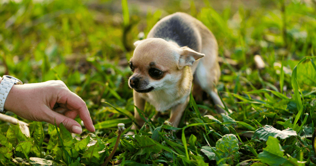 Do-Vets-Have-to-Report-Abusive-Pet-Owners